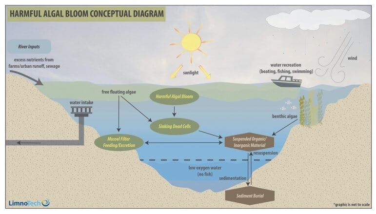 a study of the effects of harmful algal blooms and eutrophication Develop a consensus on the relationship between eutrophication and harmful algal blooms year study, a strong positive relationship between nitrogen-rich.